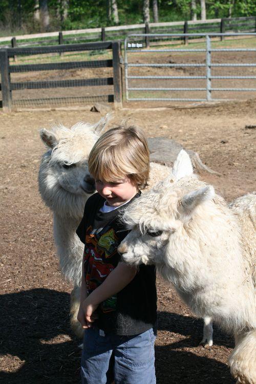 April 2012, farm trip 050